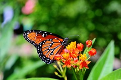 Aveda Butterfly Garden - (People and Places)