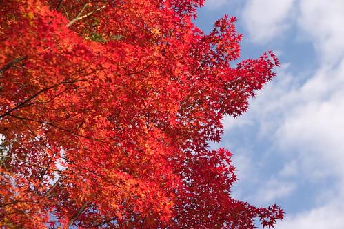 【写真】紅葉 : 鍬山神社