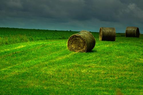 184: Hay Now
