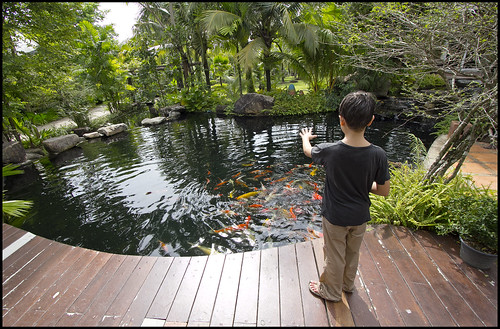 Feeding Fish at the cafe, Phuket Botanic Garden