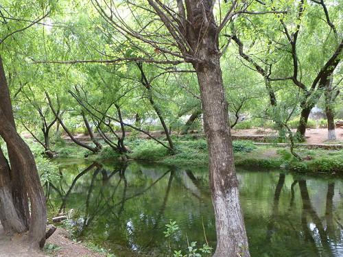 Yunnan13-Shuhe-Nature (3)