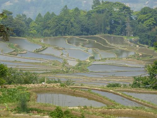 Yunnan13-Yuanyang 20 (5)