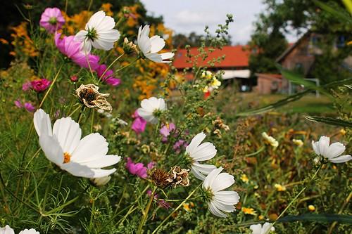 Blumenwiese Sieben Linden