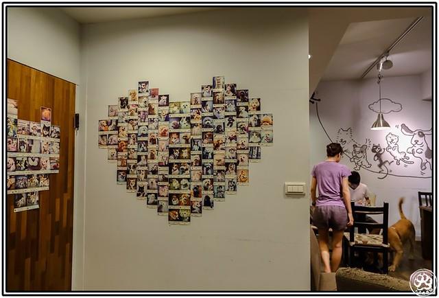 光看这墙上的动物照片墙