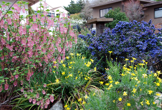 Nativescaping Habitat Restoration One Garden At A Time Latest News Earth Island Journal