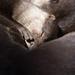 まどろみのひなた - Napping otter bros. -