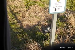 penguin-phillip-island.jpg