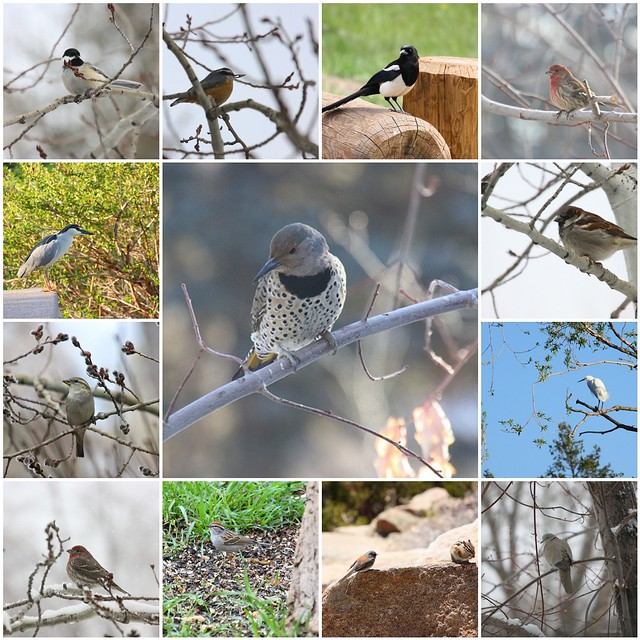 2013 Birds