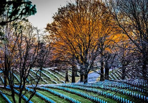 park christmas trees winter sunset orange usa tree cemetery grave arlington virginia us with unitedstates military headstone tombstone headstones national american va gravestone marker rosslyn wreaths parc gravestones ilobsterit