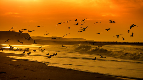 sunset beach nature strand landscape denmark meer day sonnenuntergang cloudy seagull natur northsea landschaft dänemark nordsee deceleration seemöwe thyborøn entschleunigung derhalbling