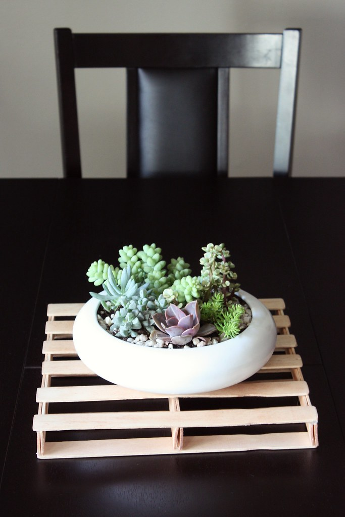 and you thrift a planter you make an indoor succulent garden that