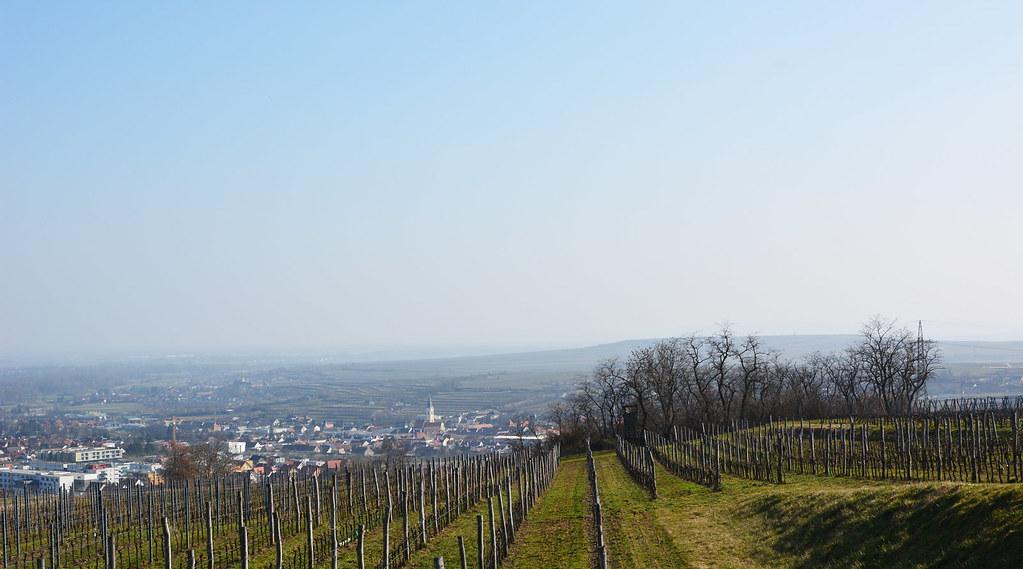 Weinweg_8