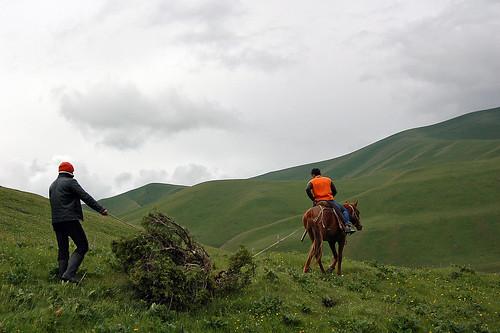 wood horse mountain montagne work cheval fire traction vert pasture travail kyrgyz kyrgyzstan gree feu bois tianshan tienshan juniperus junipertree kirghiz pâturage workinganimal kirghizstan genévrier kyrgyzpeople bêtedesomme komandy montscélestes
