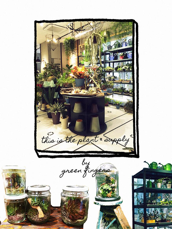 plant & supply 1