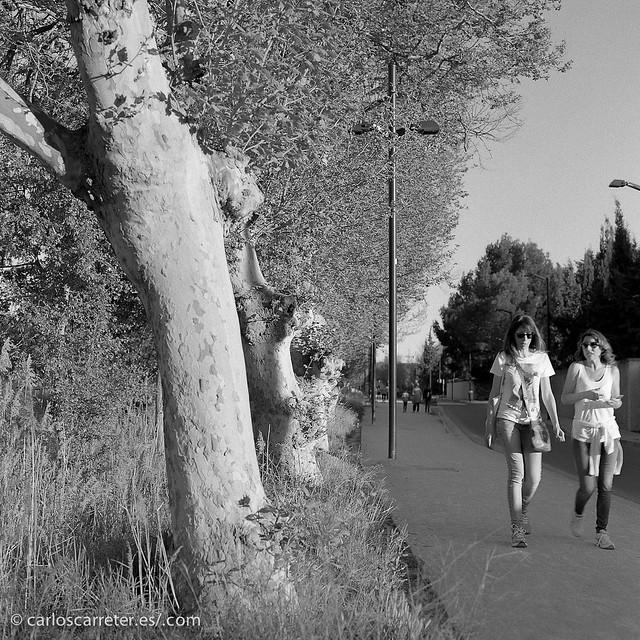 Paseando junto al Canal Imperial de Aragón