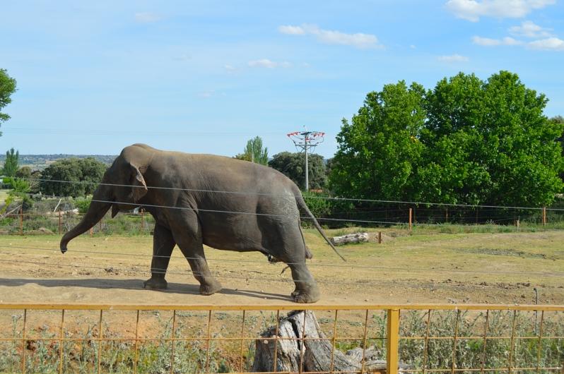 lara-vazquez-madlula-blog-safari-elefantes