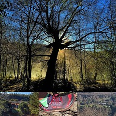 Un largo de trail running cerca de Chillan #trail #trailrunning #altrarunning #zerolimits