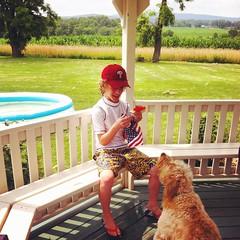 Farm, gazebo, watermelon, pool, dog... #happiness. #country #farm #gazebo #watermelon #pool #dog #dogstagram #instadog #picoftheday