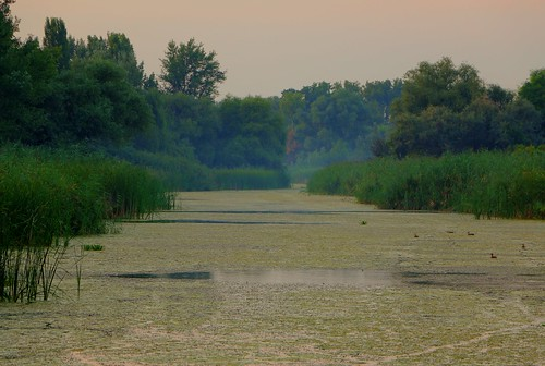 light sunset summer green reed nature water night digital canon river reeds eos duck budapest danube hdr alga 70d