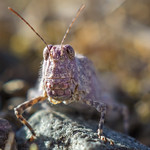 Now WHO is the most beautiful? | GROUP AVATAR: SONY NEX/alpha E-mount with Carl Zeiss lenses
