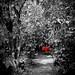 Romantic table under the Coffea trees por Brewso