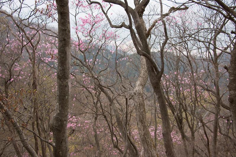 20150425-鳴虫山-0226.jpg