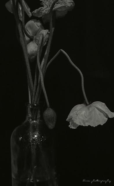 test shot (poppy)