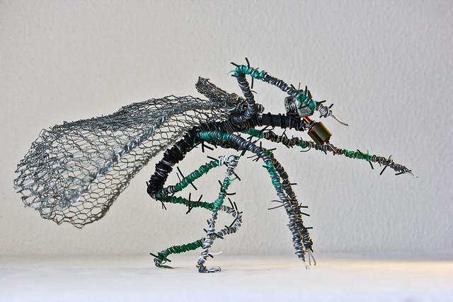 Diptera 3