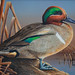 Winners of the Alabama Waterfowl Art Stamp Contest, held annually. Alabama's waterfowl stamp is required when hunting wild ducks, wild geese, brant or American coots in Alabama. Also known as the state duck stamp.
