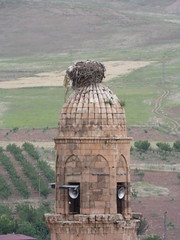 Stork Nest Atop a Minaret, Hasankeyf