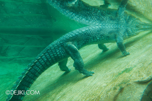 River Safari - Ganges River / Indian Gharial