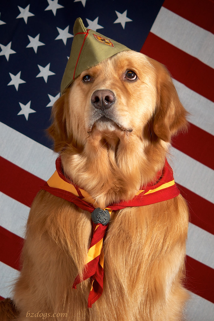 Boy Scout Dog