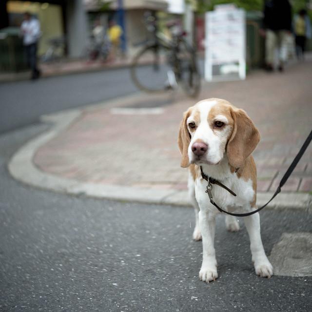 路上の待ち犬