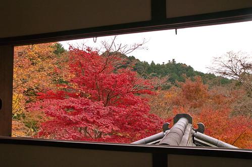 【写真】2012 紅葉 : 瑠璃光院/2020-06-07/IMGP7669