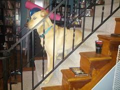 My dog sits weird, man.