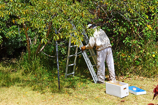 Alejandro Sets up the Temporary Bee Hive, Tenerife