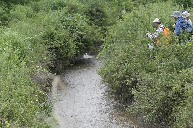 自然再生事業で工事する予定の水路.雨が続いた後だったせいか,水量が多かった.