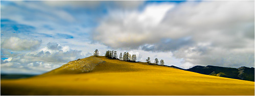 yellow hill