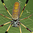 the Best of All About Insects & Spiders (Administrative invite only) group icon