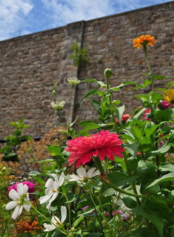 Terrace Garden (12)