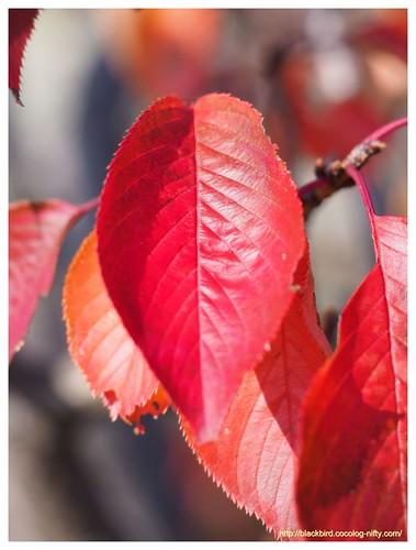 Autumn dayn #05