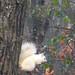 White squirrel (good omen) by danachis