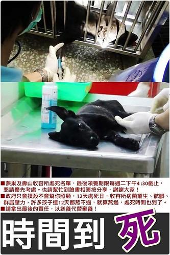 犬貓種類眾多,請以送養代替棄養!壽山和燕巢認養費都是100元辦到好