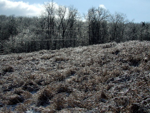 view across icy field