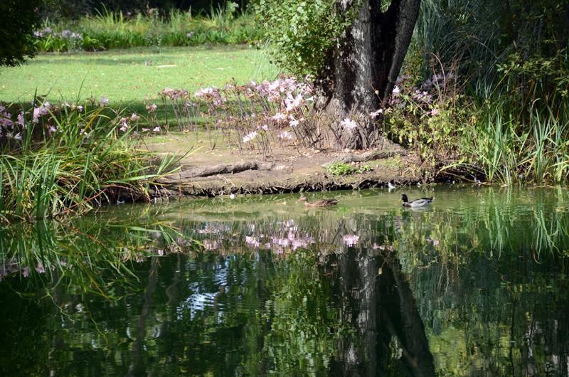 flores no parque