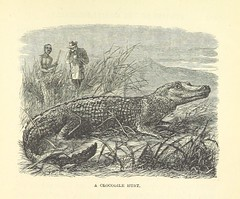 """British Library digitised image from page 253 of """"Stories of the Gorilla Country, etc"""""""