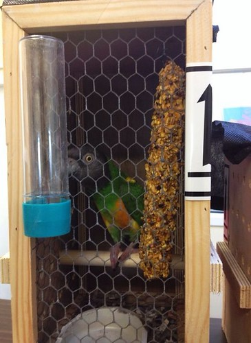 Senegal parrot in his IATA-approved travel box.