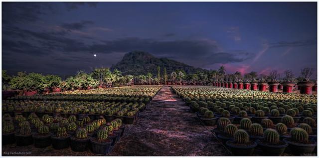 Cactus Garden Sunset