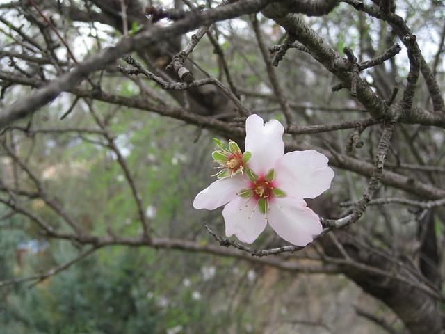 floreciendo 1