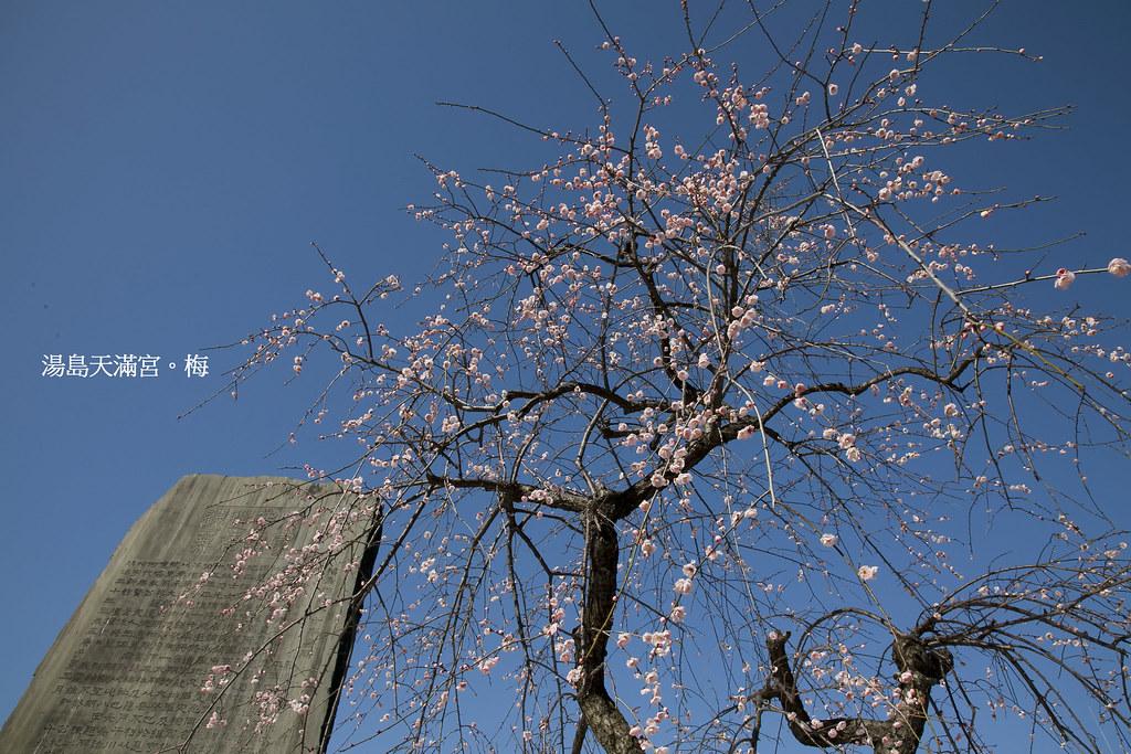 湯島天滿宮6